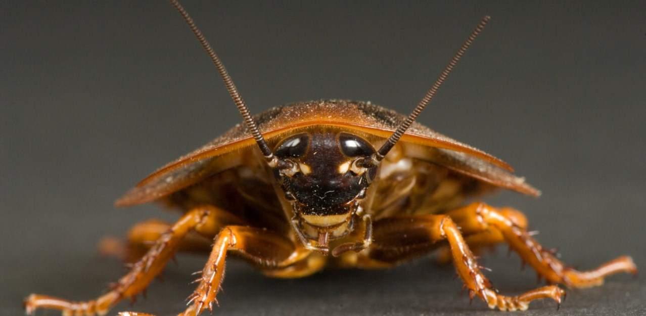 Как говорит сонник, насекомые — это волнения, тревоги, беспокойства о мелочах, хлопоты или даже болезни.